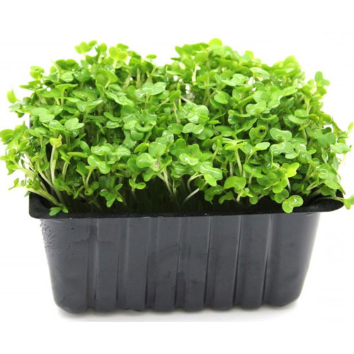 200 seeds Watercress, Garden Cress for Anti-Cancer Salad